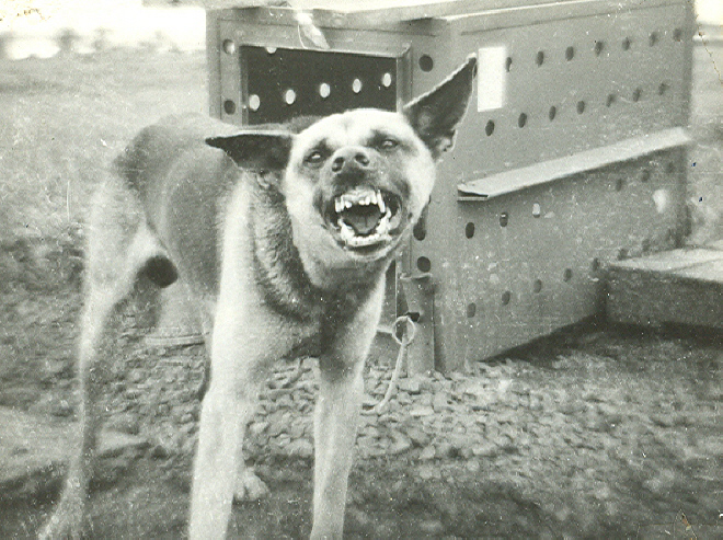 One of the meanest dogs we had.